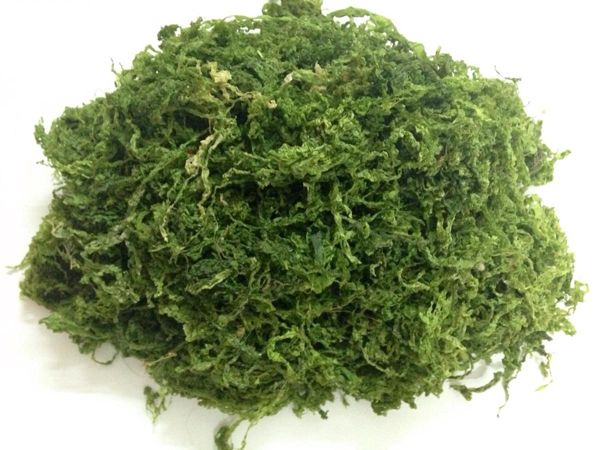 ORGANIC GREEN SEAWEED/ ULVA LACTUCA FOR ANIMAL FEED