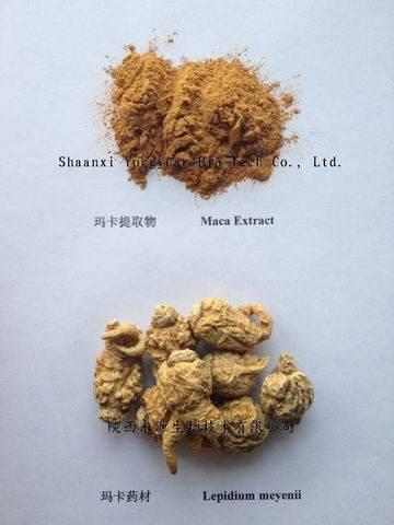 Maca P.E. enhance energy herb