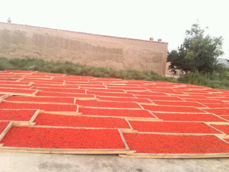 Hot selling China goji berry, new crop goji berry with good price