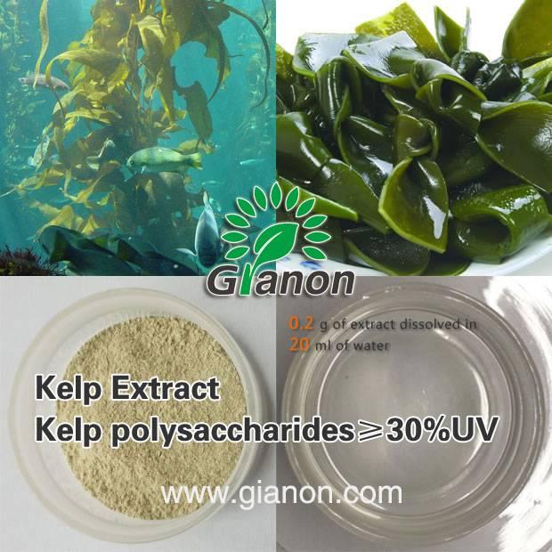 Kelp extract Polysaccharides 85%UV