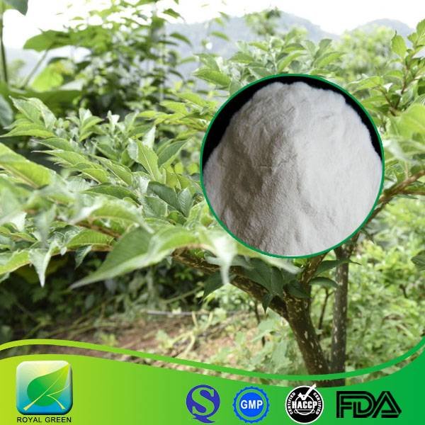 GMP Certified Manufacturer Supply High Quality Konjac Extract