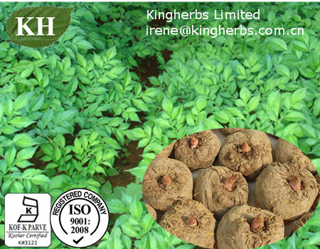 Konjac Extract;Konjac Glucomannan 80%~90% By UV