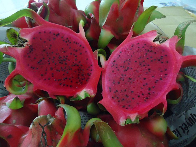 Dragon fruit - red flesh - original Vietnam - skype - sonainter5