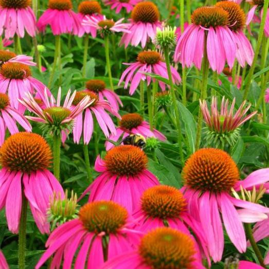 bee flower extract
