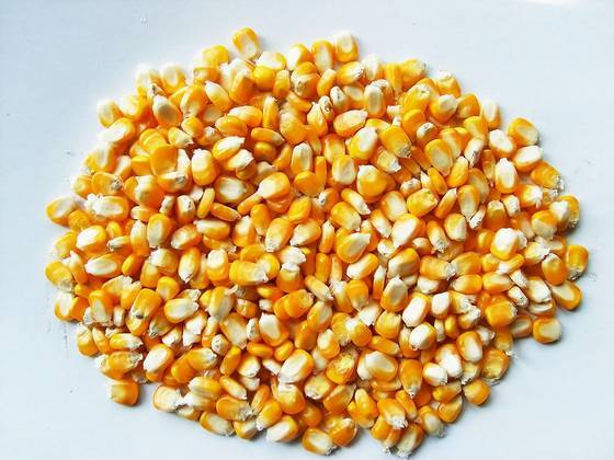 Yellow Corn (Animal Feed) Grade 2#
