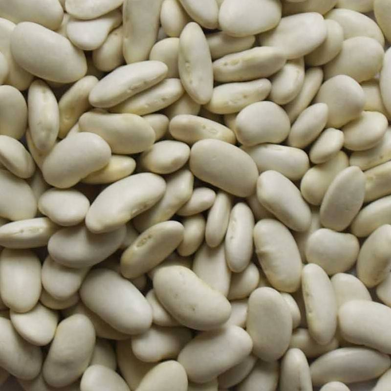 High quality White Kidney Bean extract/weight lossing