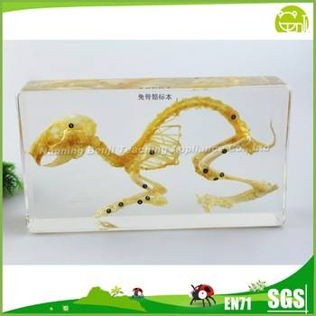 Education Equipment Rabbit Skeleton Model Biology Model