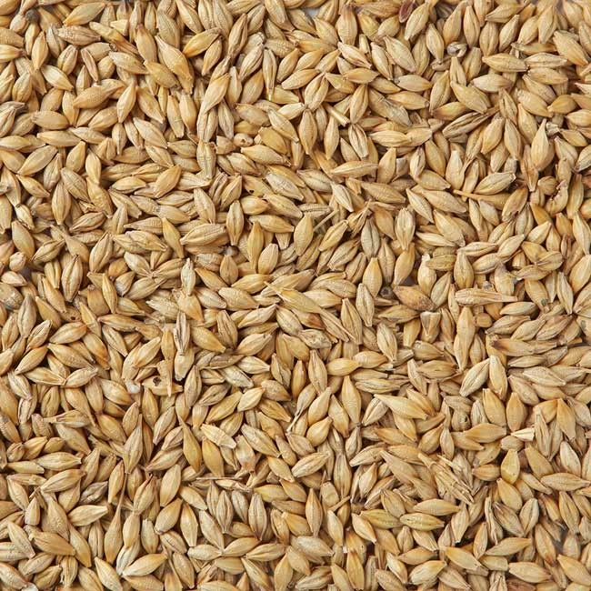 100% Organic High Nutritious Barley Seeds for Bulk Purchase