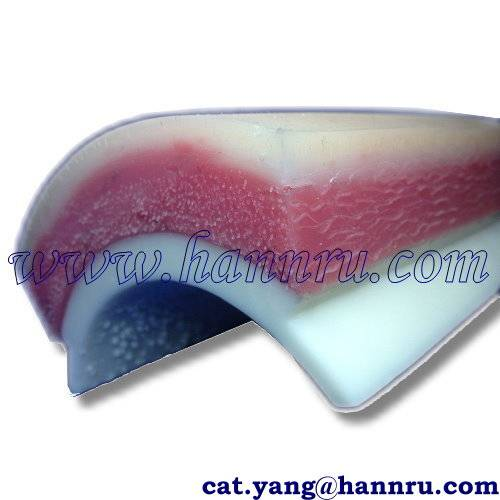 Dental model MPS-01 Suture Training Model-Thigh - Hann Ru