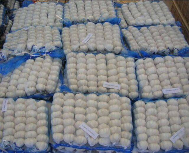 fresh garlic from jinxiang normal white garlic pure white garlic