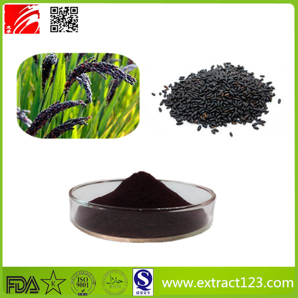 High Quality Black Rice Extract Powder