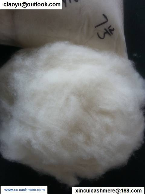 Chinese washed and carded wool