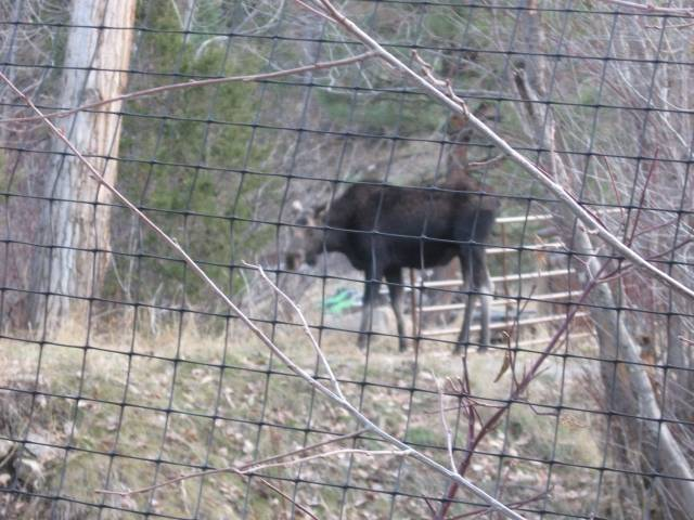 Livestock large animal elk fencing/ elk net for sale