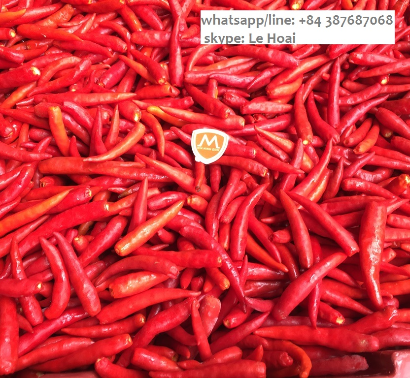 SELLING FROZEN CHILLI FROM VIET NAM