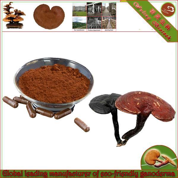 Lingzhi mushroom shell broken spore powder