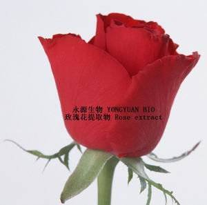 Rose extract delay aging and compact skin 10:1 Rose Polyphenol