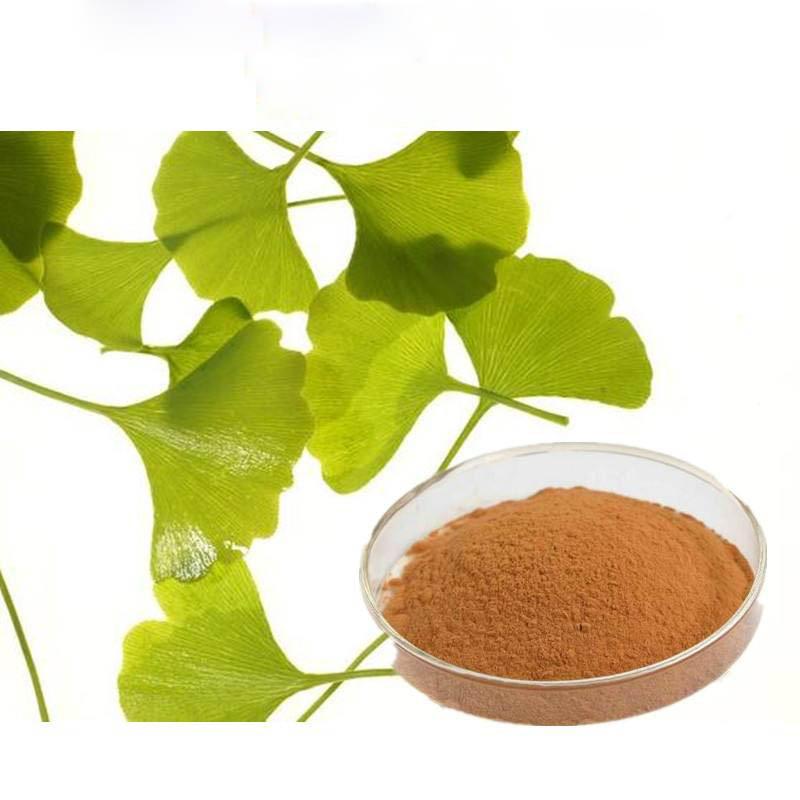 100% Herbal Ginko Flavones Terpenlactone Ginkgo Biloba Leaves Extract
