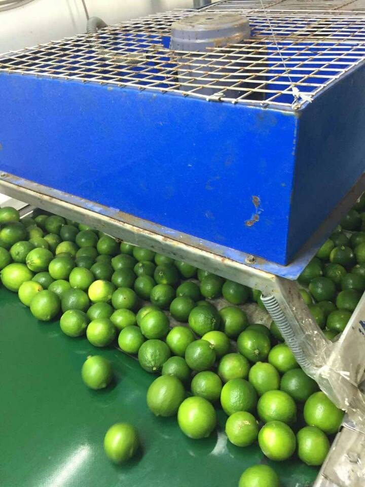 Vietnam Seedless Lime