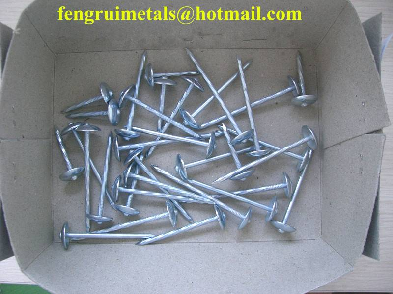 BWG9X2.5inch galvanized umbrella roofing nails