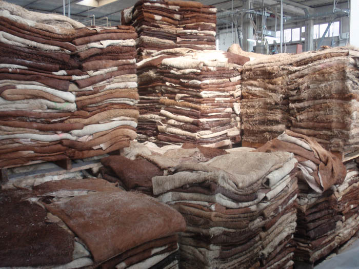Top Quality Wet Salted Donkey Hides, Dry Salted donkey skin