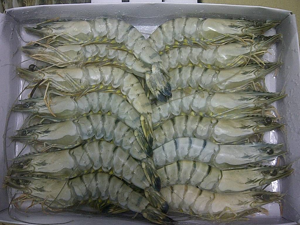 Frozen Black tiger HOSO Shrimp