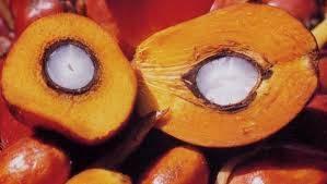 Crude palm oil & RBD palm oil