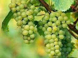 Fresh Green/Black/Red Grapes