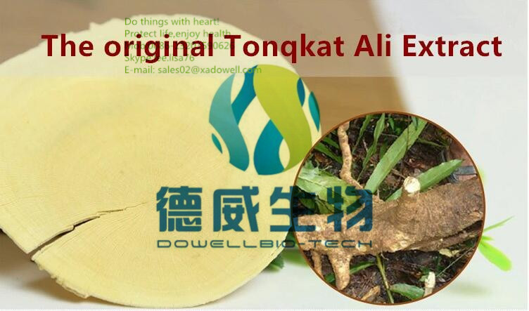 Effective Male Enhancement Tongkat Ali Extract / Pure Tongkat Ali Root Powder