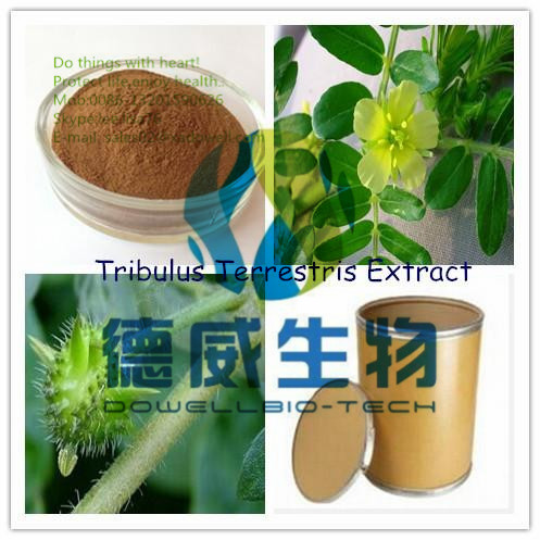 Effective Male Enhancement Tribulus Terrestris Powder