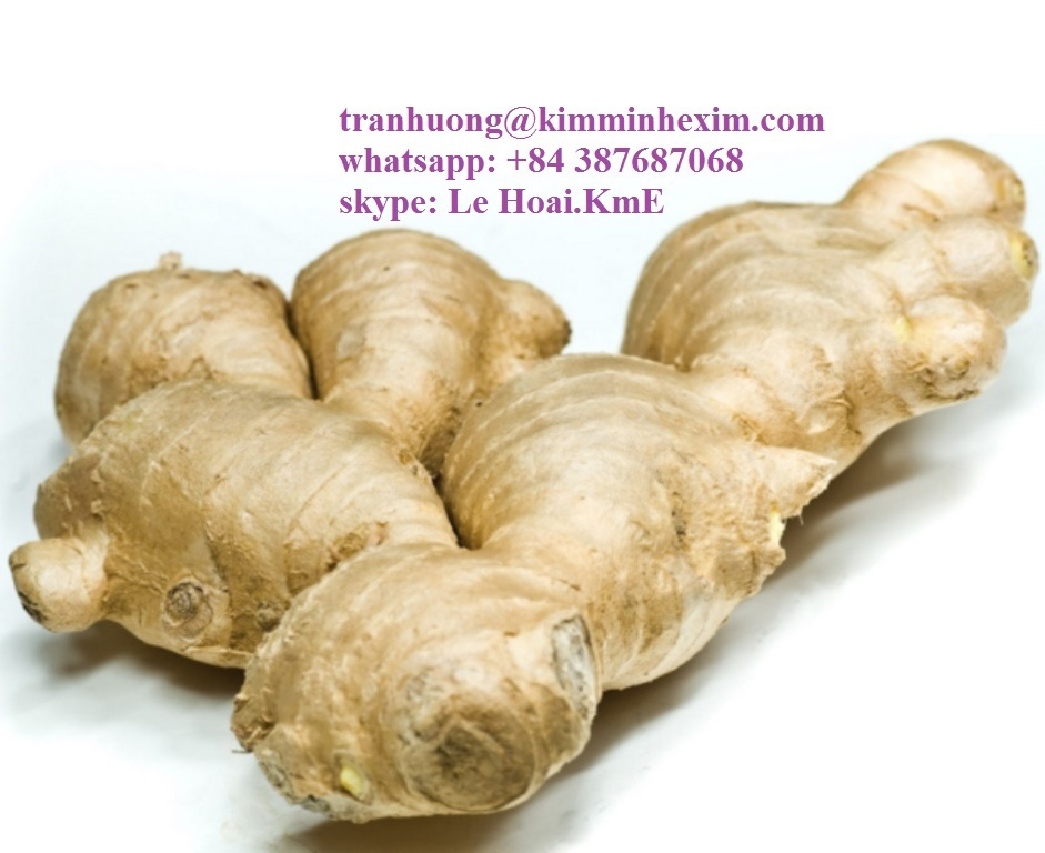 FRESH GINGER WITH HIGH QUALITY
