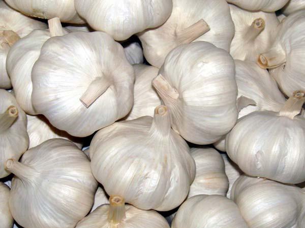 Fresh Garlic and Garlic Powder for Sale