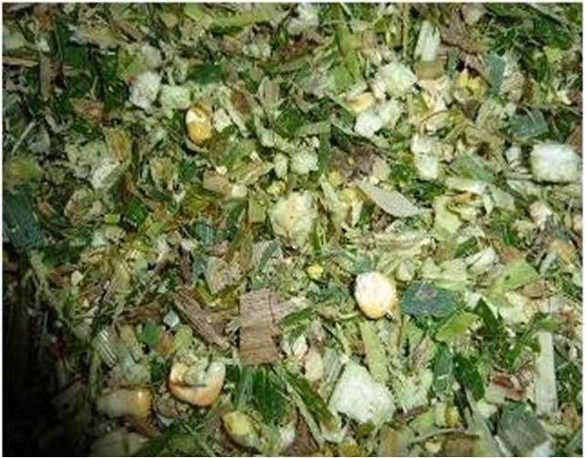 CORN SILAGE FOR CATTLE FEEDING, CHEAP PRICE