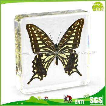 Benji Butterfly Specimens for Education Biology Teaching Aids