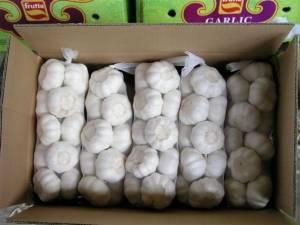 Supply the china fresh garlic, fresh garlic with all size