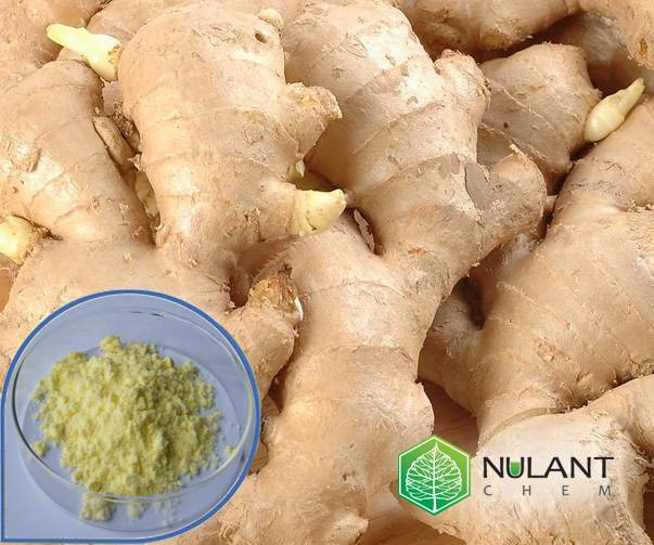 Ginger root extract 5% Gingerols