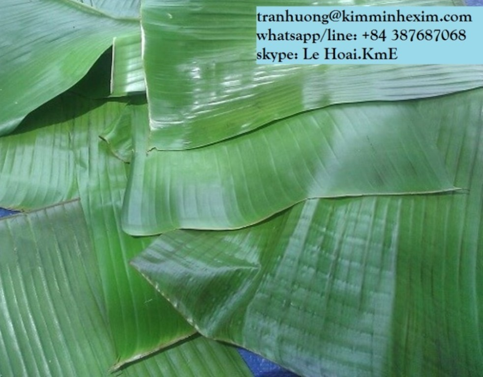 BANANA LEAF FROM VIET NAM
