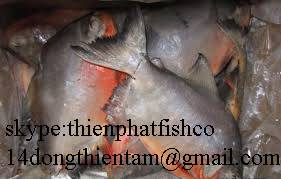 we supply red pomfret with good price , have COC to iraq