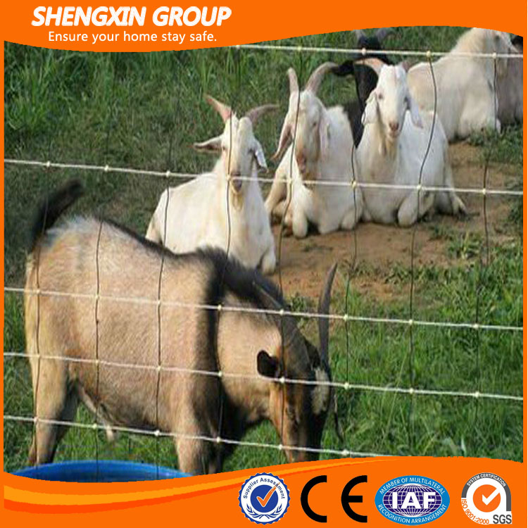 China Good Quality Field Fence or Cattle Fence