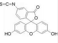 FITC,fluorescein isothiocyante
