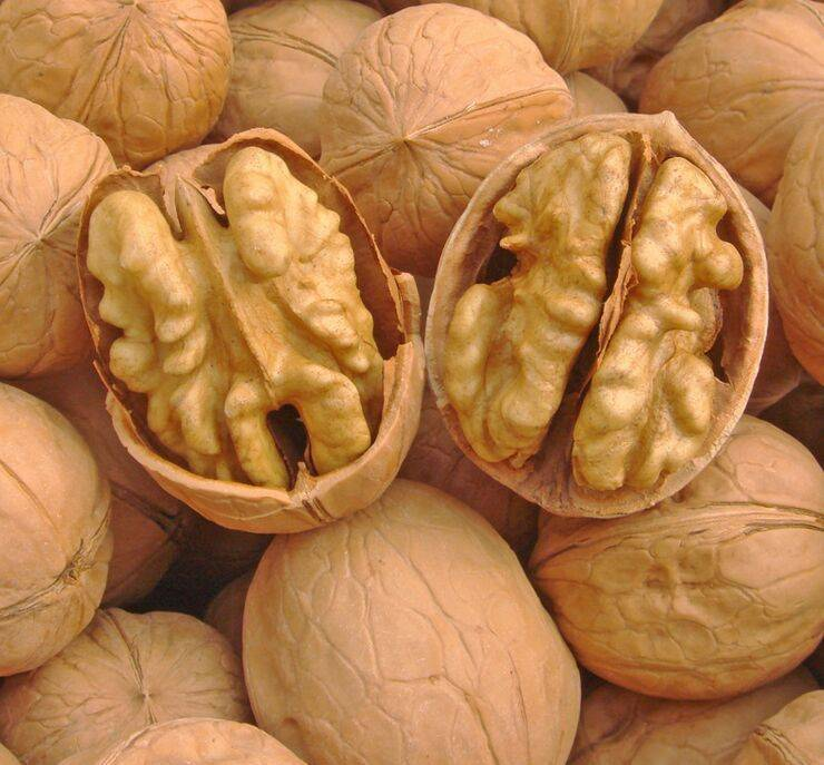 natural delicious walnuts unshelled dried