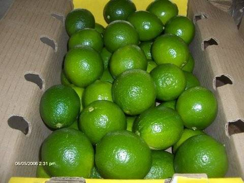 Fresh Green Lemon - Lime - Citrus seed seedless Vietnam 2016 (Jolie whatsapp viber 84 98 358 7558)