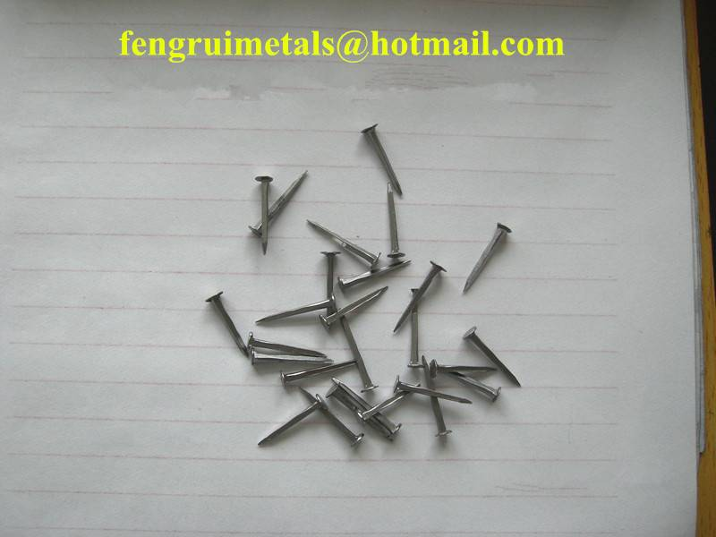 White shoe tack nails
