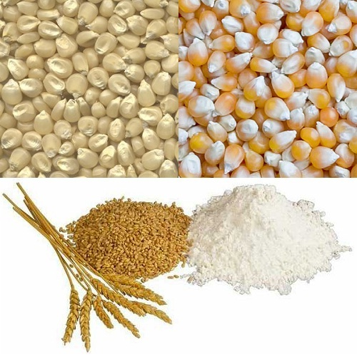 Grains Barley, Buckwheat, Maize, Wheat, Rice for Sale at good prices