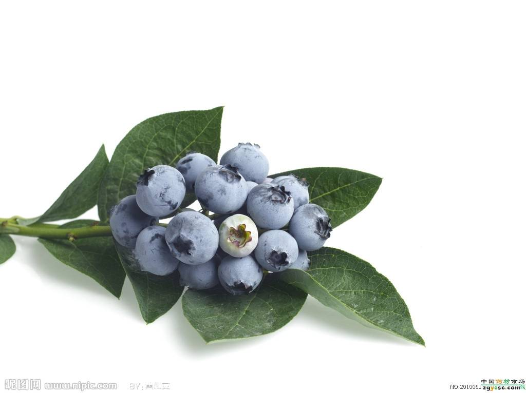 natural blueberry extracts 25%