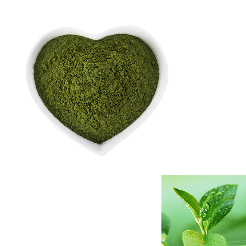 Green tea leaves extract 98% polyphenols/ 80%Catechines/50% EGCG