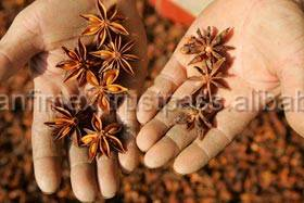 WHOLESALE VIETNAM SPICES STAR ANISE