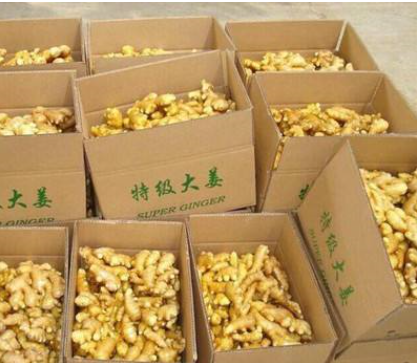 Chinese Ginger and fresh Ginger supplier and export to world