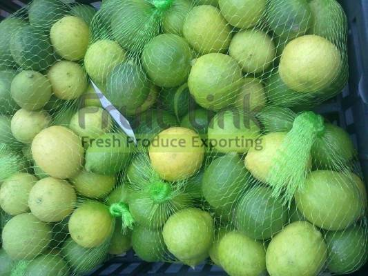 Egyptian lime by fruit link