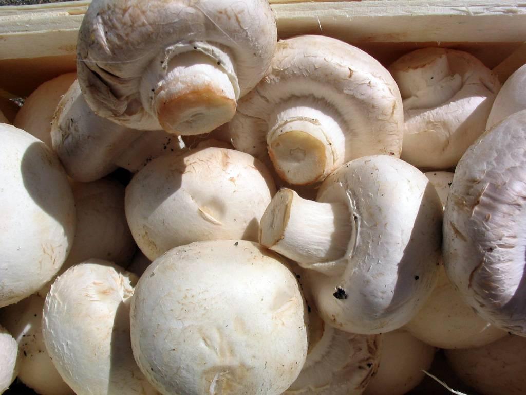 Thailand IQF mushroom