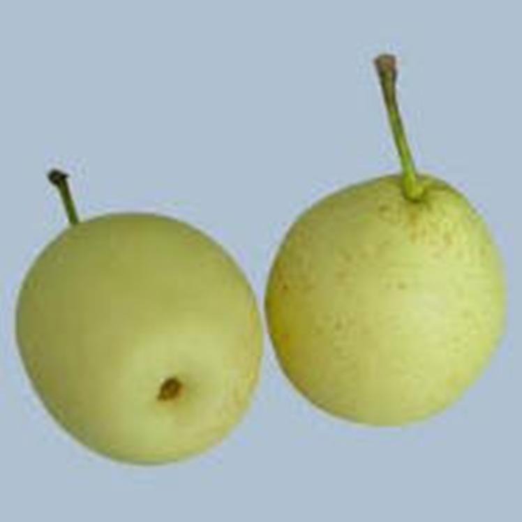 Fresh Ya pear,Emeral pear,Su pear & Fragant pear